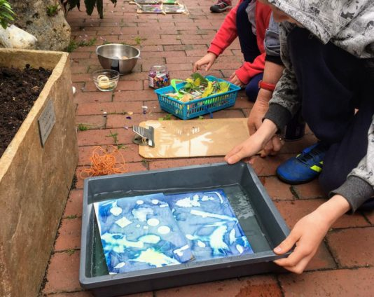 Child processing cyanotype